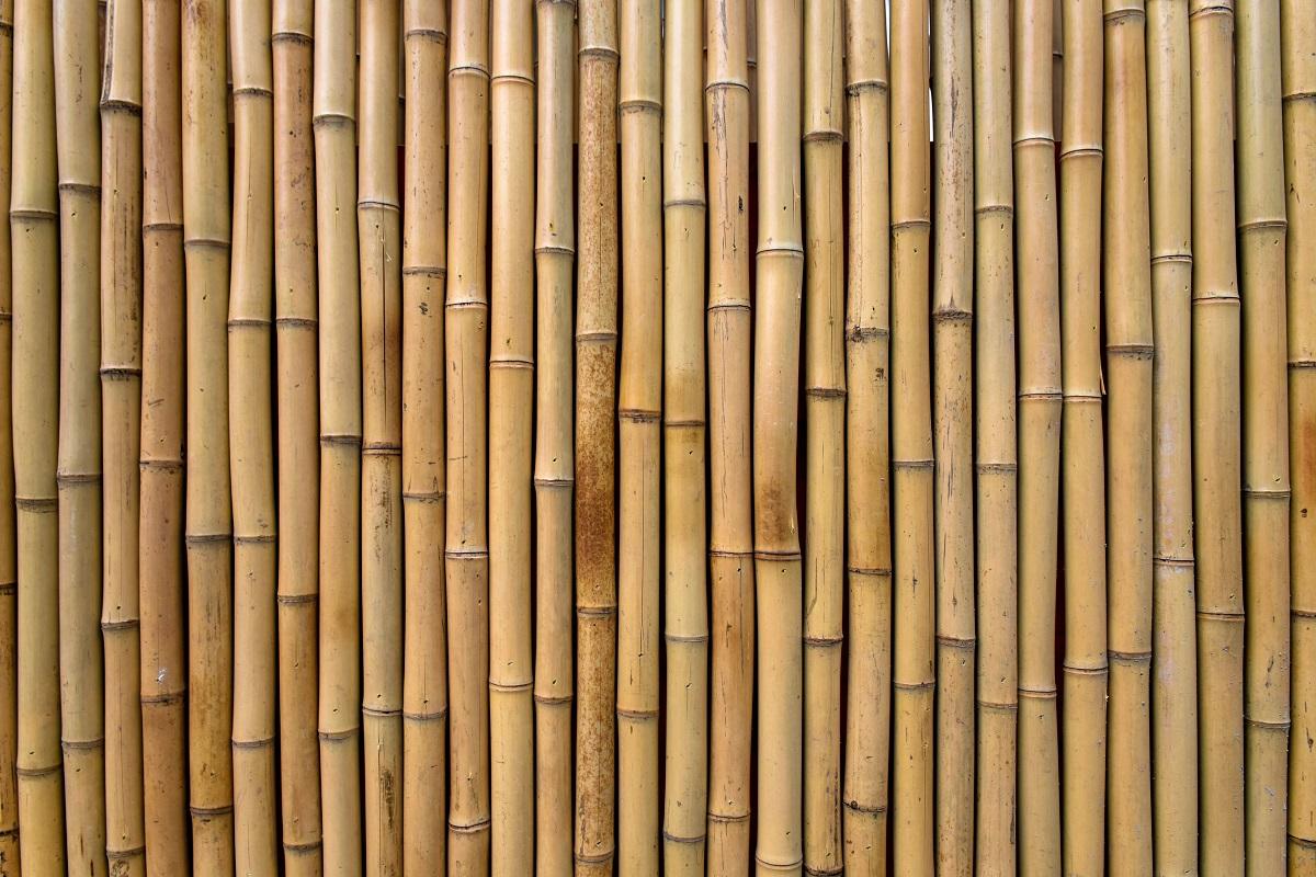 Plant Towering Bamboos